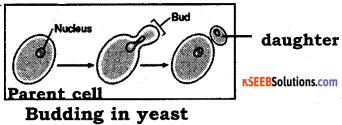 2nd PUC Biology Model Question Paper 4 with Answers 1
