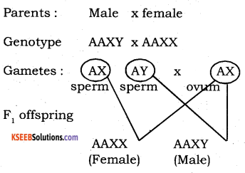 2nd PUC Biology Model Question Paper 4 with Answers 11