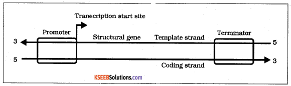 2nd PUC Biology Previous Year Question Paper june 2019 9