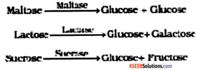 1st PUC Biology Model Question Paper 3 with Answers img 3