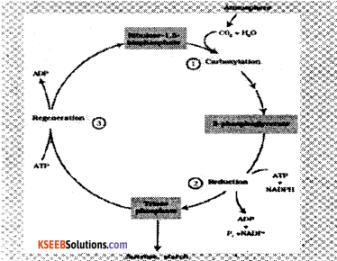 1st PUC Biology Model Question Paper 3 with Answers img 5