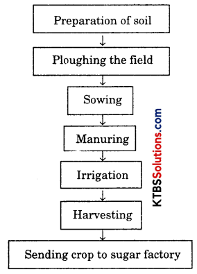 KSEEB Solutions for Class 8 Science Chapter 1 Crop Production and Management Q10.1